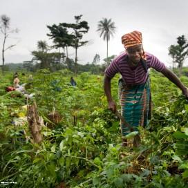 UNIFEM: Gender and Aid Effectiveness